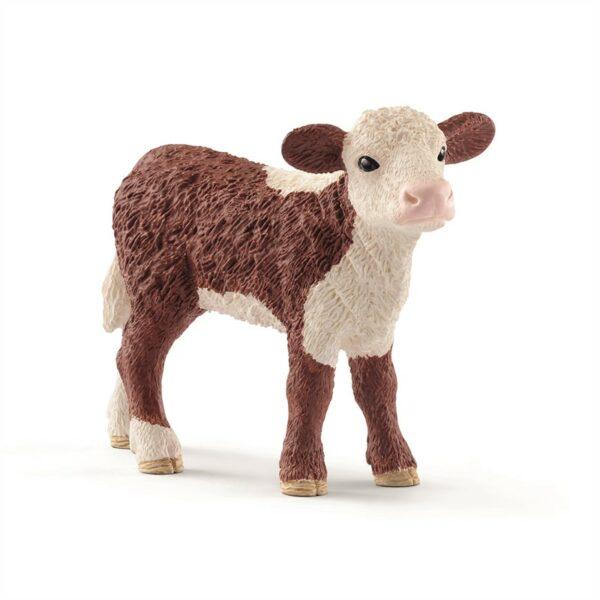 Hereford calf